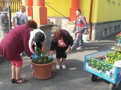 Výsadba kvetov