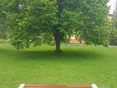 Revitalizácia parku