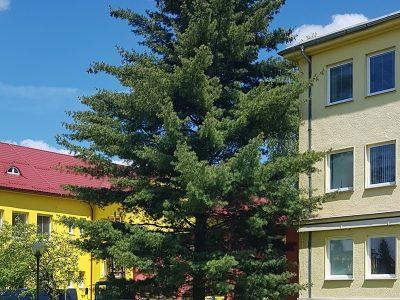 Príbeh stromu